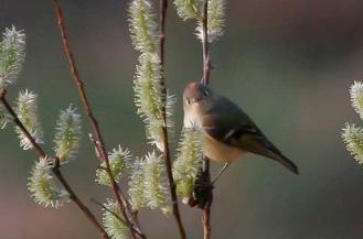 Photo courtesy of Saint Paul Audubon Society